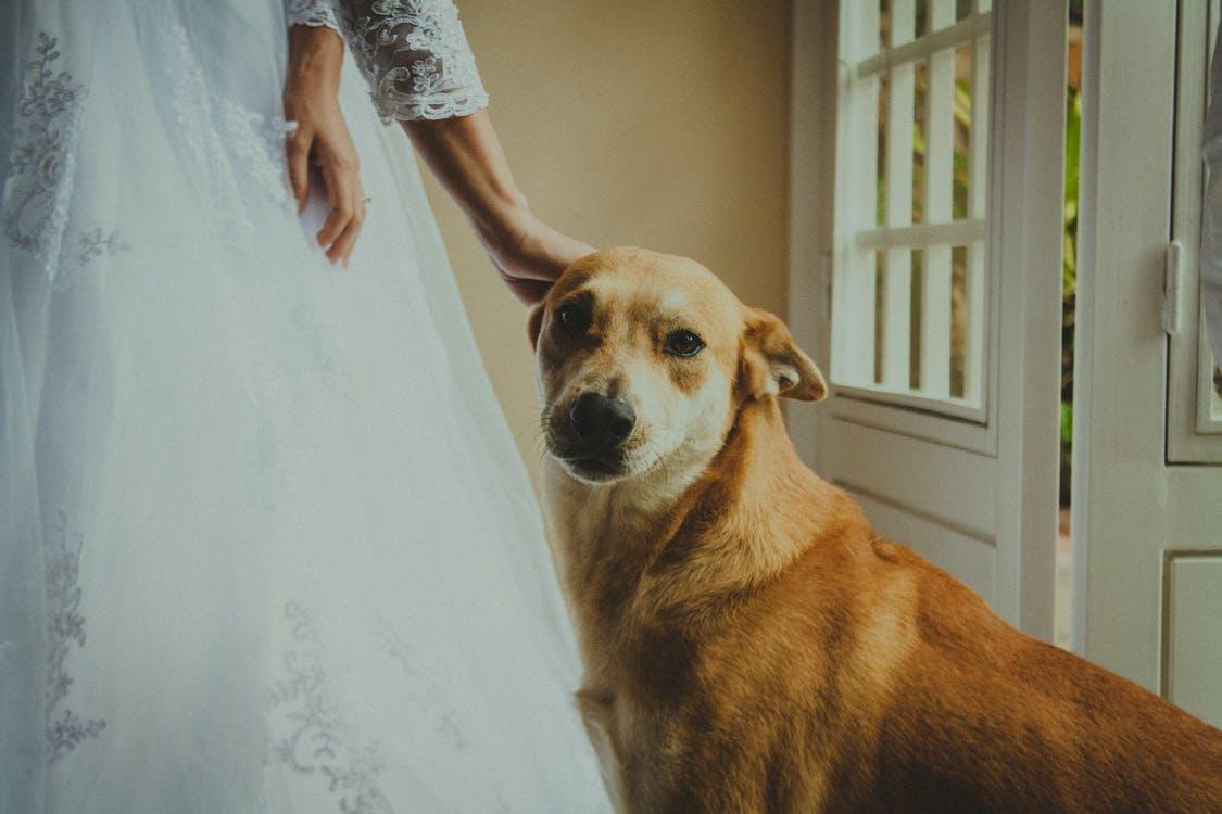 7  tipp, amivel igazán stílusossá és egyedivé tehetitek az esküvőt